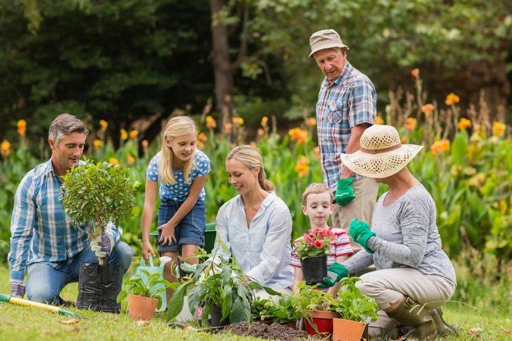Что обязательно нужно сделать на даче в сентябре и октябре: работы в огороде и саду