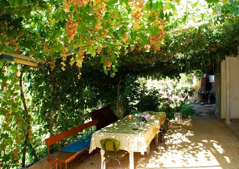 Строительство и декорирование беседки из виноградника