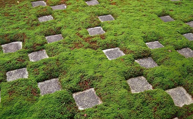 Стабилизированный мох в интерьерах: креативная отделка стен и актуальный тренд в озеленении