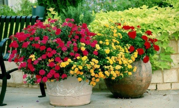 Украшение для сада своими руками: уличные вазоны для цветов из разных материалов