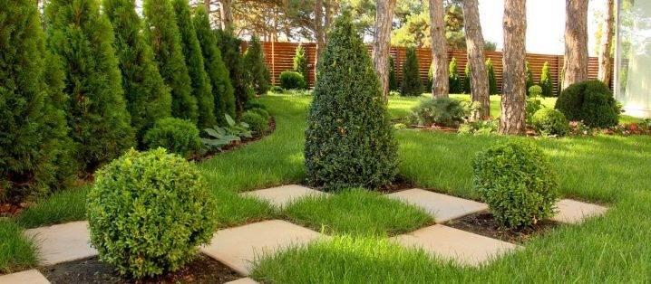 """Туи в ландшафтном дизайне (58 фото): выбираем уличные растения в горшках сорта """"шаровая"""" туя и """"брабант"""" для сада, варианты применения можжевельника на садовом участке"""