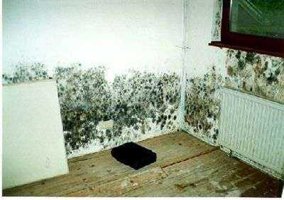 Причины сырости в частном доме в углу - консультация