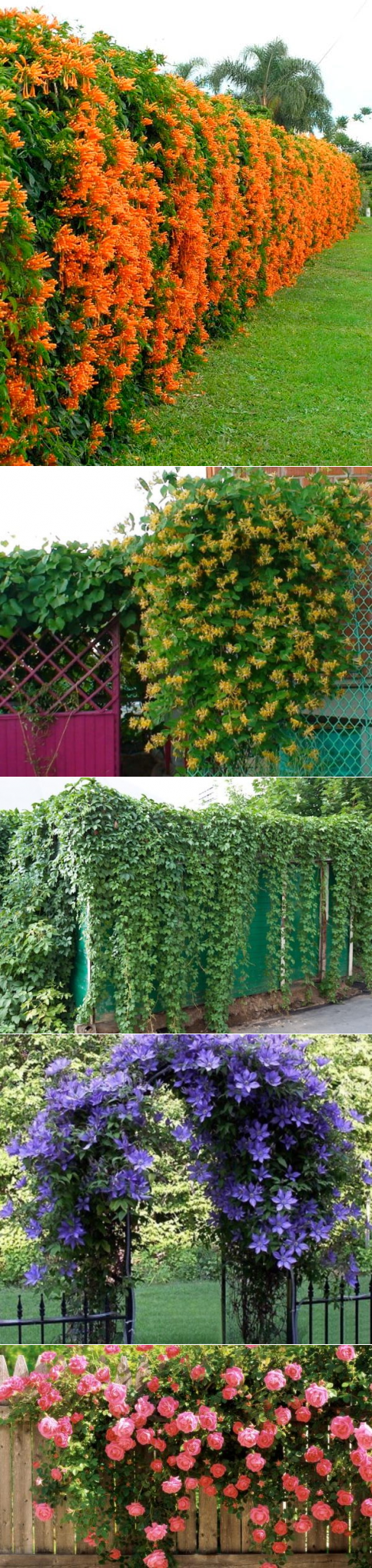 Примеры быстрорастущих растений и пара советов по их выбору