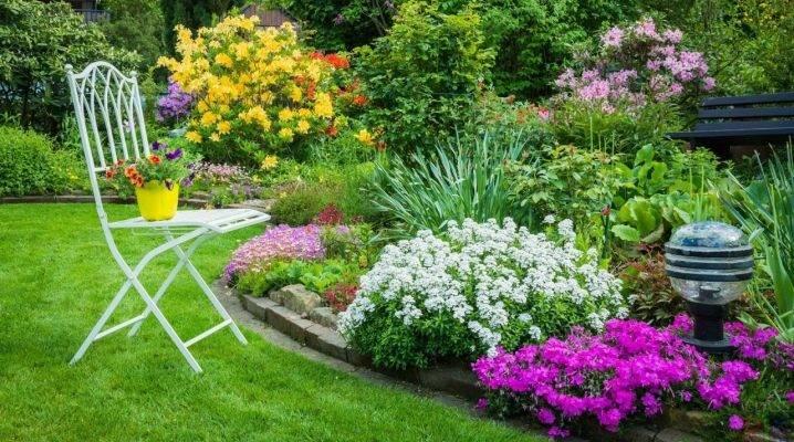 Низкорослые садовые цветы (28 фото): многолетние и однолетние декоративные карликовые виды и сорта цветов для дачи, примеры клумб
