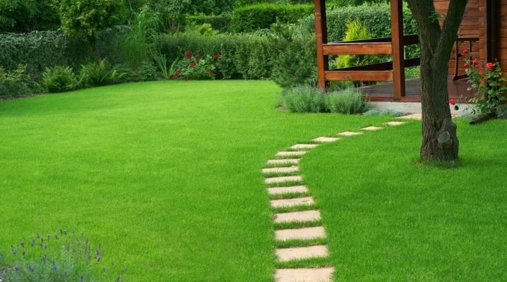 Газонная трава: какую выбрать, как и когда садить, уход за газоном
