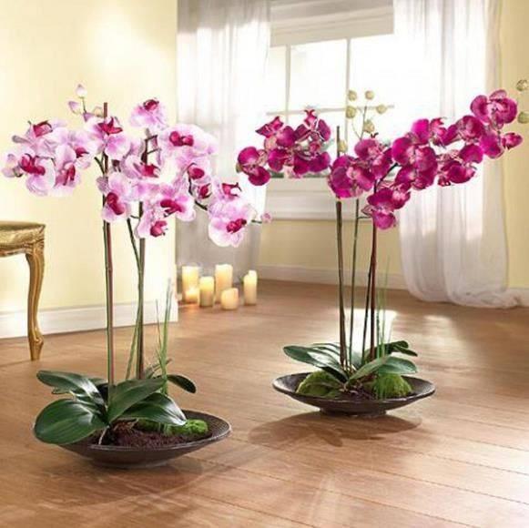 Как вырастить орхидею в домашних условиях - практическое руководство по агротехнике и уходу для новичков: видео о том, можно ли, при каких условиях и как правильно это делать