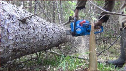 Методика распила дерева на пилораме