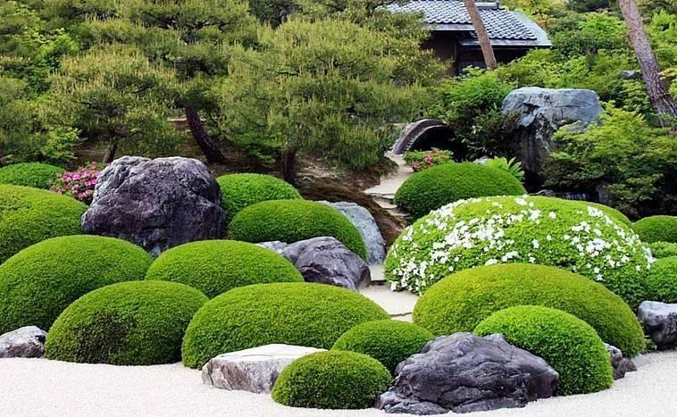 Декоративный мох - описание, выращивание, фото идеи