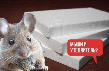 Грызут ли монтажную пену мыши что говорят собственники