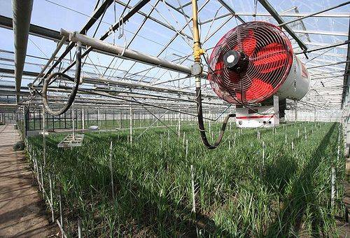 Отопление теплицы: варианты отопительных систем, их особенности, способы обустройства