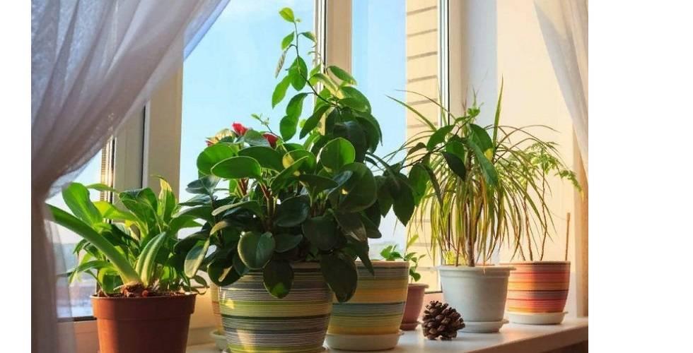 Какие цветы и комнатные растения нельзя держать дома и почему?