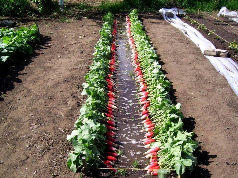Правильные грядки — меньше работы, больше урожая. выбираем грядку на дачу. фото — ботаничка.ru