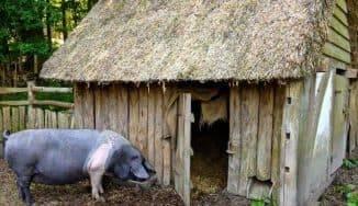 Как построить свинарник своими руками: подготовка проекта и выбор материалов