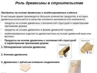 Пихта сибирская: описание, сорта, посадка и уход