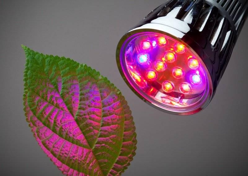 Какие лампы выбрать для теплицы: светодиодные, дрл и другие