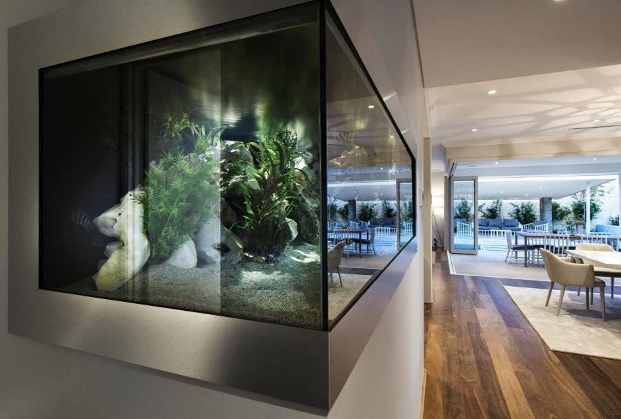 Аквариум своими руками: как сделать простой и красивый аквариум для дома и офиса (80 фото)