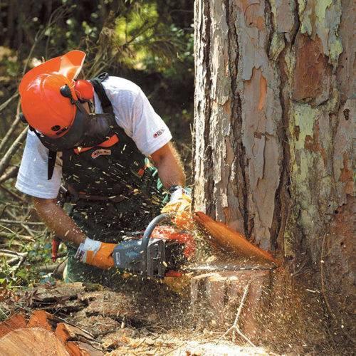 Как правильно спилить большое дерево возле частного дома своими руками: удаление бензопилой по частям и прочие способы, пилить болгаркой или нет и другие советы