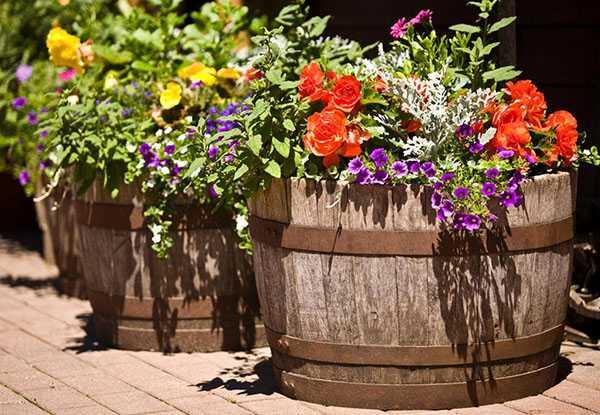 Уличные вазоны для цветов. советы по выбору и изготовлению своими руками (60 фото) - dominafiesta