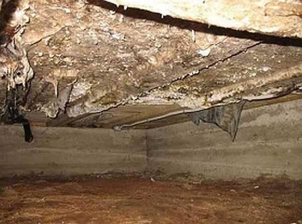 Как избавиться от конденсата в погребе: причины, почему собирается на потолке, полу, что делать, как удалить в гараже, деревянном доме летом, зимой