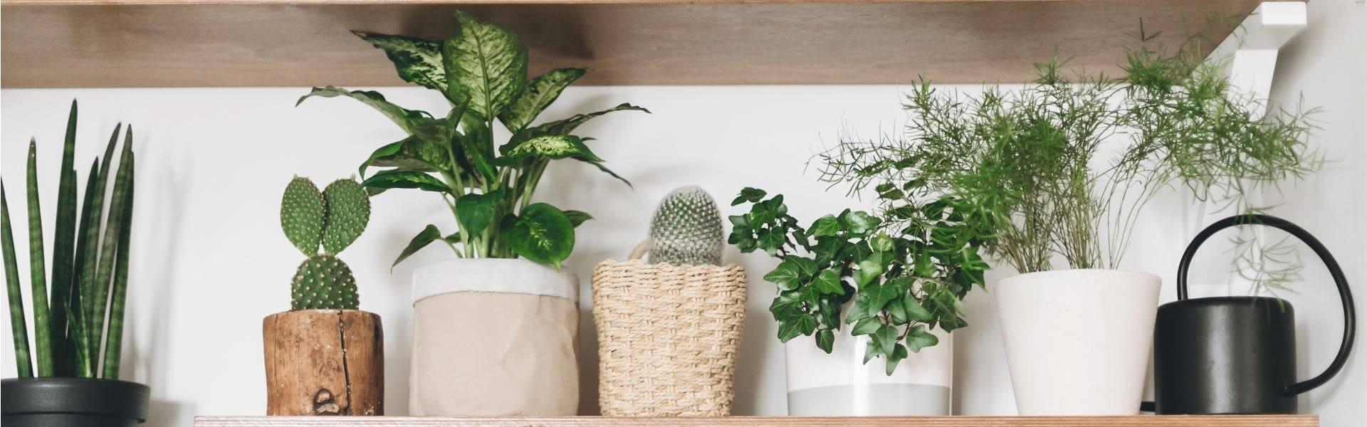 Цветы в доме: приметы и суеверия о комнатных растениях