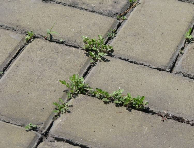 Как избавиться от травы между тротуарной плиткой — методы и варианты