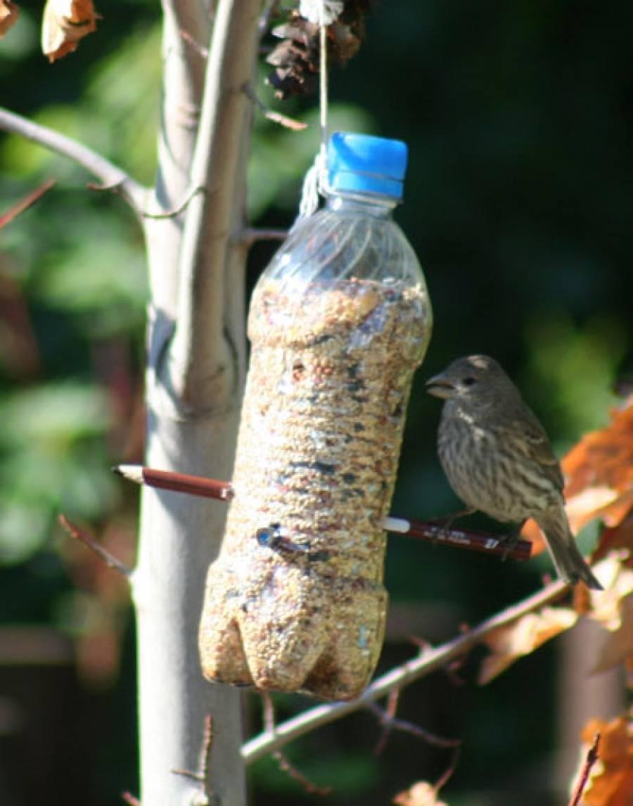 Кормушка для птиц своими руками: 12 оригинальных идей, как сделать из бутылки, коробки, дерева (фото)