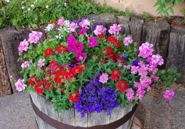 Петунии: выращивание, посадка, виды рассады и особенности ухода - sadovnikam.ru