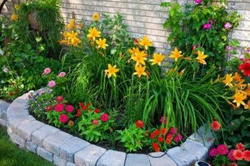 Клумба, цветущая все лето: какие цветы посадить