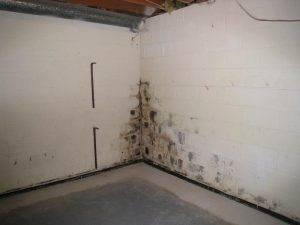 Сыреют стены в частном доме что делать