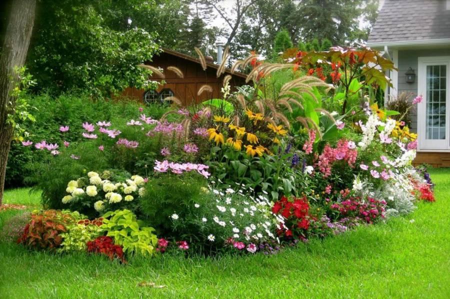 Самые красивые однолетние цветы для сада и клумбы