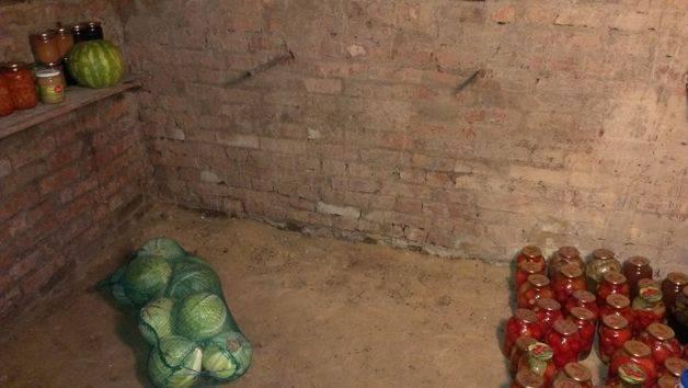 Плесень в погребе похожая на вату: как избавиться от грибка, обработка погреба