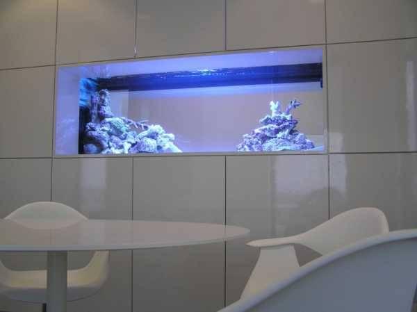 Создай лучший дизайн аквариума своими руками