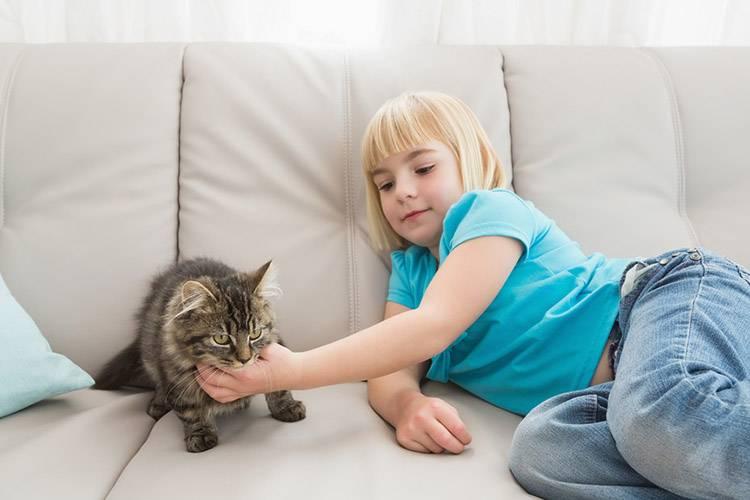 Как почистить кожаный диван в домашних условиях от грязи: быстро и эффективно
