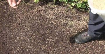 Как выбрать траву для газона: практические советы и рекомендации
