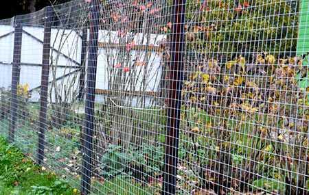Забор из сетки рабицы: фото, секционный для дачи, красивый для частного дома, виды и варианты на видео