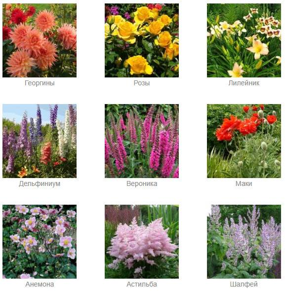 Низкорослые цветы для клумбы, цветущие все лето: фото, названия однолетников и многолетников