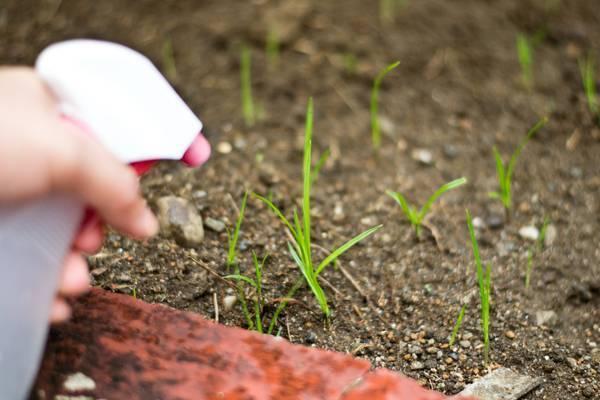 Как избавиться от травы между тротуарной плиткой: эффективные способы