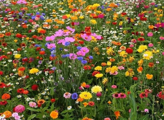 Выбираем газонную траву для дачи: советы для разных климатических условий