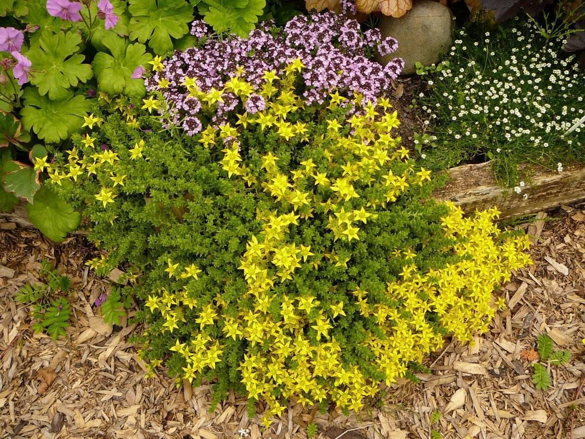 Однолетние цветы для дачи (65 фото): названия садовых однолетников для урала и других мест. высокие, вьющиеся и другие виды для клумбы