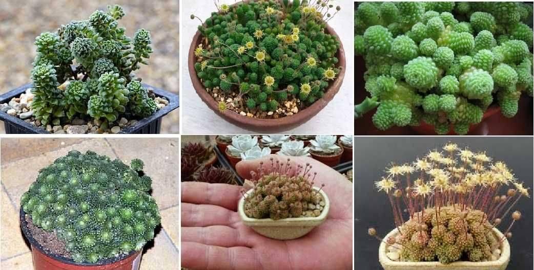 Флорариум в банке: тропический сад в твоей квартире