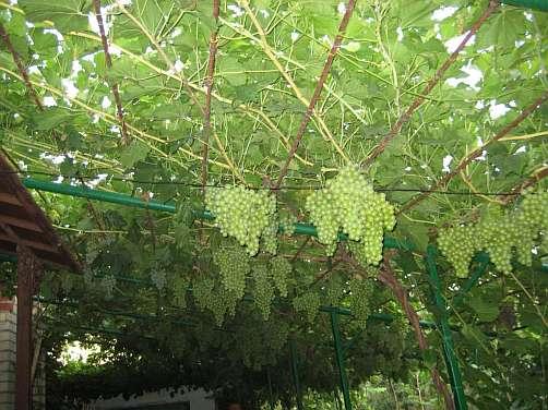 Беседка для винограда: Каких видов бывают и из каких материалов изготавливают?