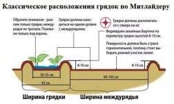 Схема посадки картофеля — расстояние между лунками