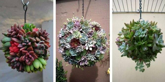 Композиции из цветов суккулентов: декор своими руками, посадка и уход