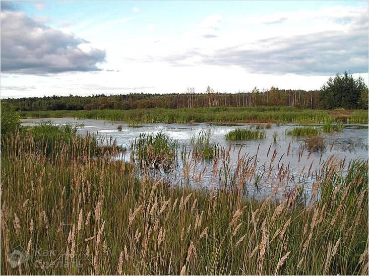 Фундамент на болоте своими руками