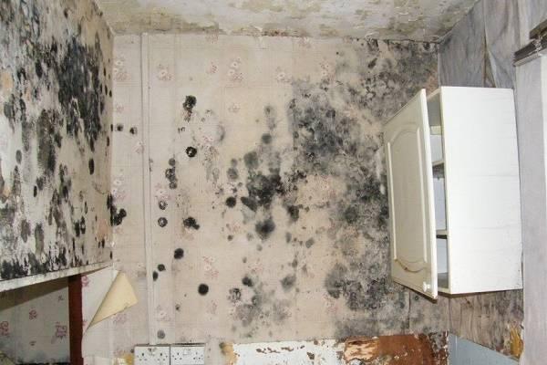 Чем опасна черная плесень в доме для организма человека и как от неё избавиться: советы