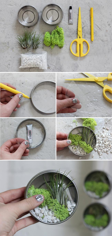 Как сделать флорариум своими руками: инструкция для начинающих
