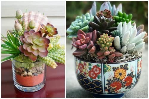 Композиции из суккулентов (цветущих и нет): как посадить, полив и уход
