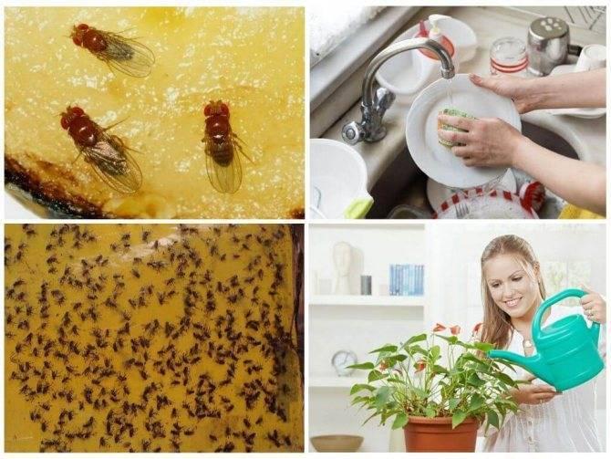 Как избавиться от мошек на кухне в домашних условиях самостоятельно народными средства – рецепты с фото