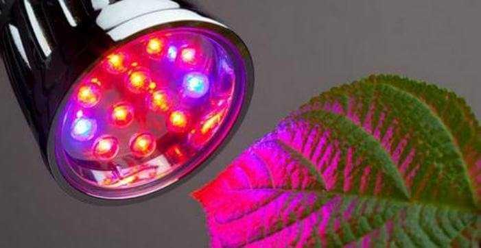 Лампы для теплиц: критерии выбора