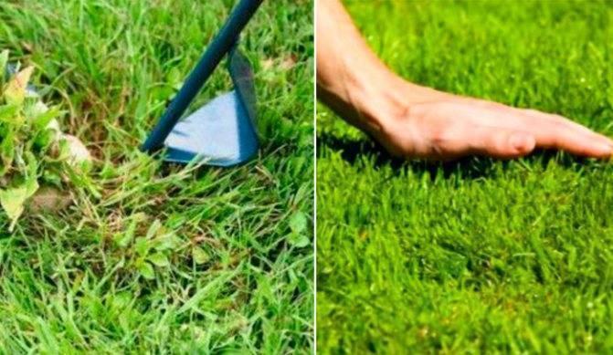 Семена для газона: как выбрать правильный состав смеси, чтобы посадить газон
